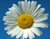 Blume mein-tagestipp